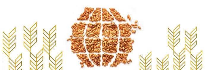 EU Wheat Futures & Options